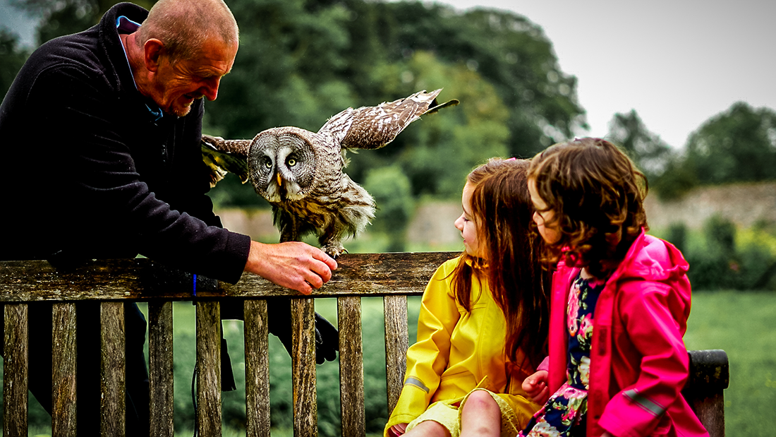 National Bird of Prey Centre - two children looking at an owl